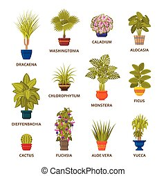 装飾用である, houseplants, 中に, ポット, set., 花屋, 屋内, ヤシの木, そして, 内部,...