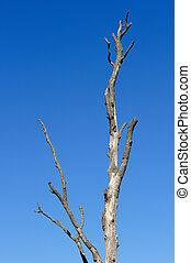 裸露樹, 針對, 藍色的天空