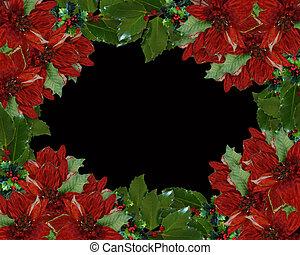 西洋ヒイラギ, クリスマス, ボーダー, ポインセチア