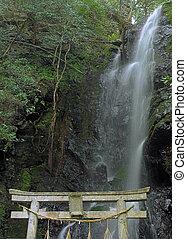 西洋ヒイラギ, 滝