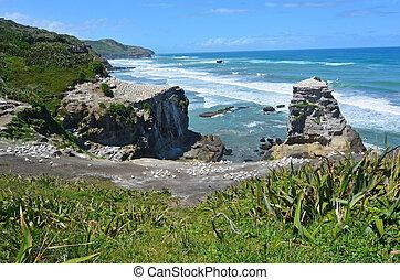 西蘭島, 殖民地,  -, 塘鵝, 新,  muriwai