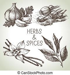 要素, ハーブ, スケッチ, デザイン, 台所, 手, 引かれる, spices.