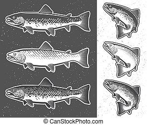 要素, fishing., 紋章, デザイン, 型, ラベル, 釣り, マス