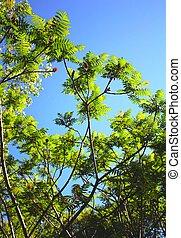 見る, ミシガン州, 熱帯 木