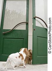 見る, 中, ドア, 犬