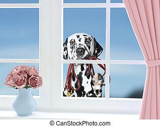 見る, 革ひも, 窓, によって, 犬