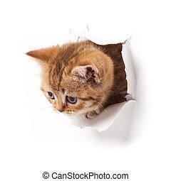 見る, paper., の上, 子ネコ