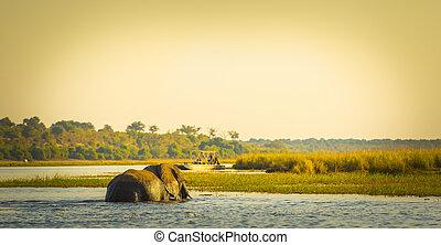 観光客, 上に, 象, サファリ, アフリカ