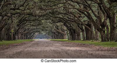 角度, オーク, 木, 生きている, 低い, 光景