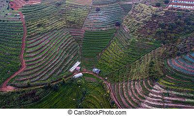 角度, 光景, 高く, 航空写真, 区域, 農業, 写真