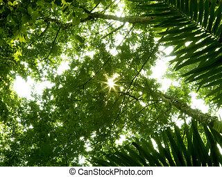 角度, 森林, 大雨, 低