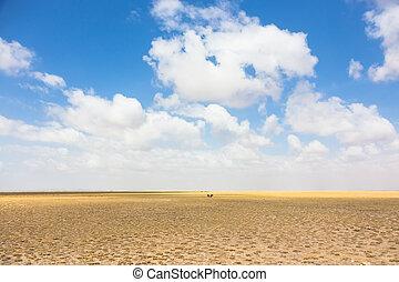 角馬, 在, african, wilderness.