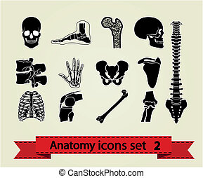 解剖学, アイコン, セット, 2