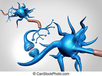 解剖学, ニューロン