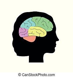 解剖学, ベクトル, イラスト, 脳, 人間
