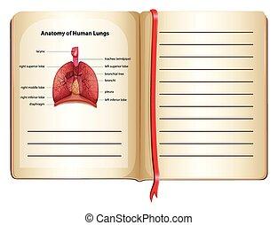 解剖学, 人間, 肺, ページ