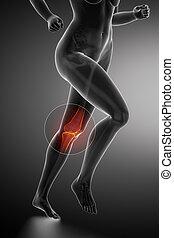 解剖学, 膝, 動くこと, 女, -