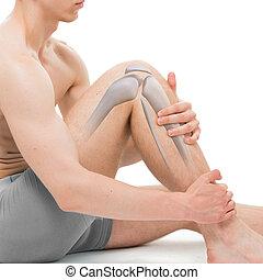解剖学, 膝, 白, 隔離された, 骨