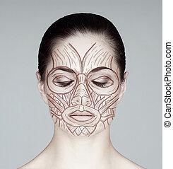 解剖学, woman., 筋肉, ビュー。, 顔