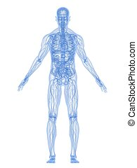 解剖學, 人類