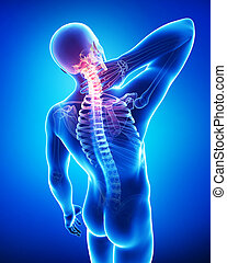 解剖學, ......的, 男性, 頸項痛苦, 上, 藍色
