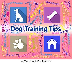 訓練, 犬, イヌ科動物, 先端