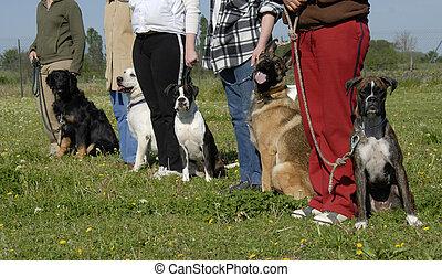 訓練, 犬