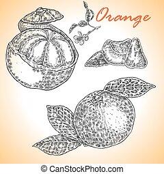 詳しい, ベクトル, illustra, コレクション, 手, orange., 引かれる, 大いに