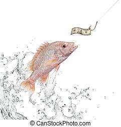 誘餌, 釣魚