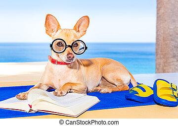 読書, 犬