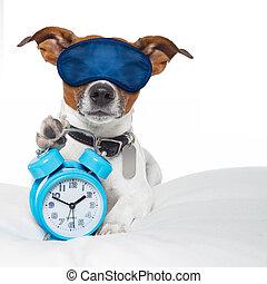 警報, 睡眠のマスク, 犬, 時計