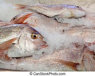 變冷, 提供, fish, 粉碎冰, 新鮮