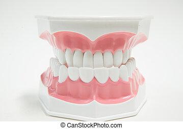 變白, 牙齒