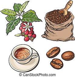 豆, 進化, ベリー, エスプレッソ, コーヒー