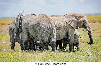象の群れ, 保護, 赤ん坊 象, 中に, kenya, アフリカ