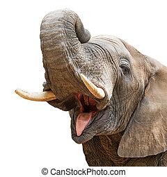 象, の上, 口, トランク, クローズアップ, 開いた