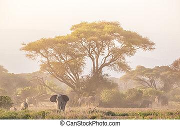 象, の前, kilimanjaro, amboseli, kenya