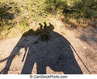 象, サファリ, ∥において∥, ビクトリアは 落ちる, 中に, ザンビア