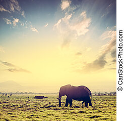 象, 上に, アフリカ, サバンナ, ∥において∥, sunset., サファリ, 中に, amboseli, kenya, アフリカ
