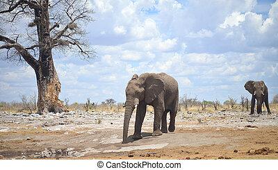 象, 中に, アフリカ