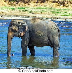 象, 中に, 川