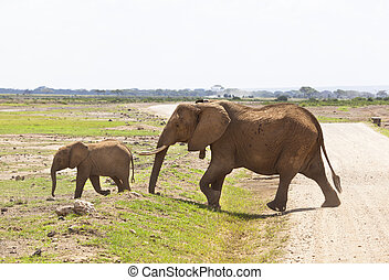 象, 中に, kenya