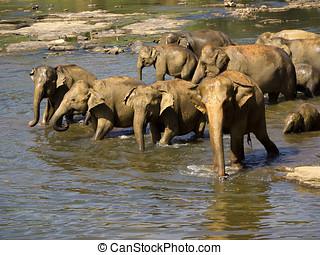 象, 入浴