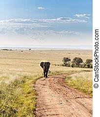 象, 歩くこと, 中に, ∥, サバンナ