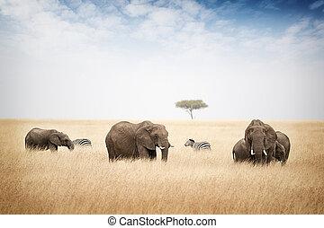 象, 牧草, 中に, kenya, アフリカ
