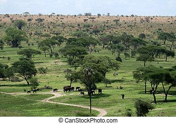 象, 生息地, -, tarangire, 国民, park., タンザニア, アフリカ