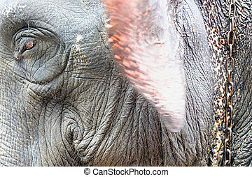象, portrait.