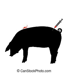 豬, 得到, an, 免疫, 針對, 疾病, ......的, 蠓, 咬