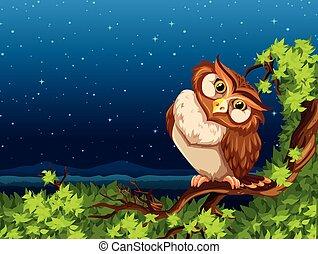 貓頭鷹, 夜晚