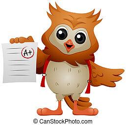 貓頭鷹, 學生